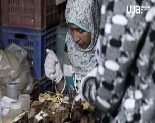 Tercera semana de trabajos arqueológicos en la necrópolis de Qubett el-Hawa en Asuán (Egipto)
