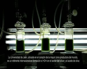 Universidad de Jaén, referente internacional en I+D+I para el sector oleícola