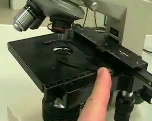 Descripcion del microscopio óptico