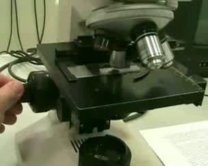 Manejo del microscopio óptico